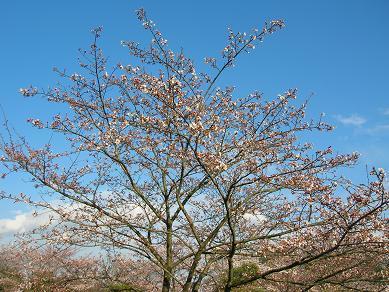 2008.3.31-takao1.jpg