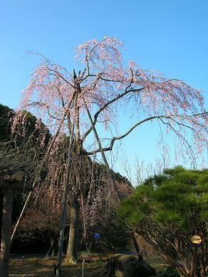 2008.3.31-takao2.jpg