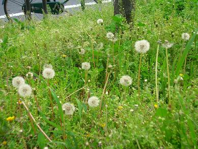 2008.4.29-nohara1.jpg