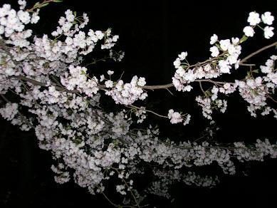 2009.3.29-yozakura.jpg