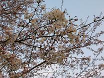 2009.3.31-park2.jpg